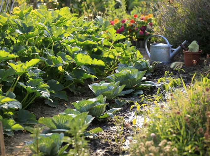Potager ou jardin fleuri : comment aménager un talus ? - Elle Décoration