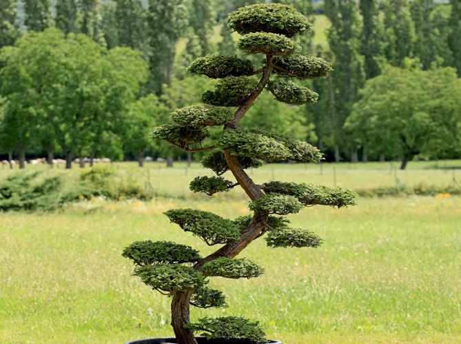 Comment tailler ses arbres en nuage? - Elle Décoration