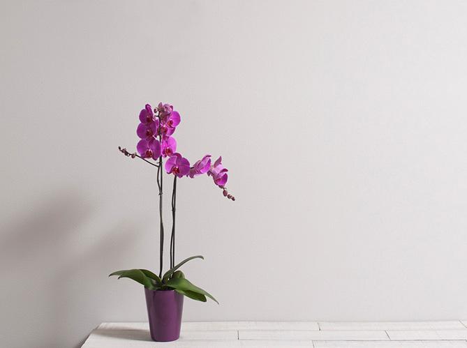 tout savoir sur le langage des fleurs elle d coration. Black Bedroom Furniture Sets. Home Design Ideas