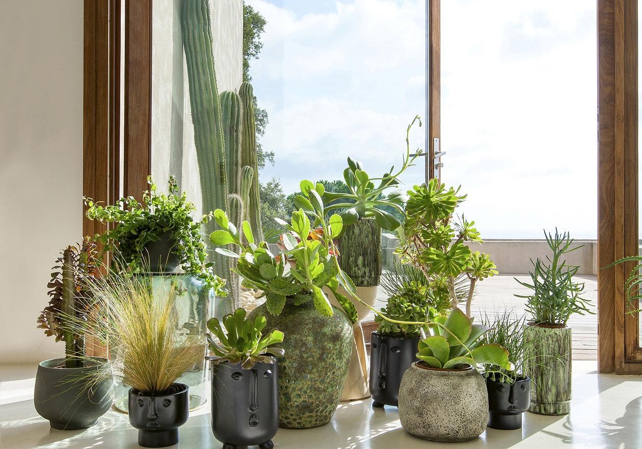 Suspension Pour Plantes D Intérieur les fans de plantes vont adorer ces comptes instagram - elle