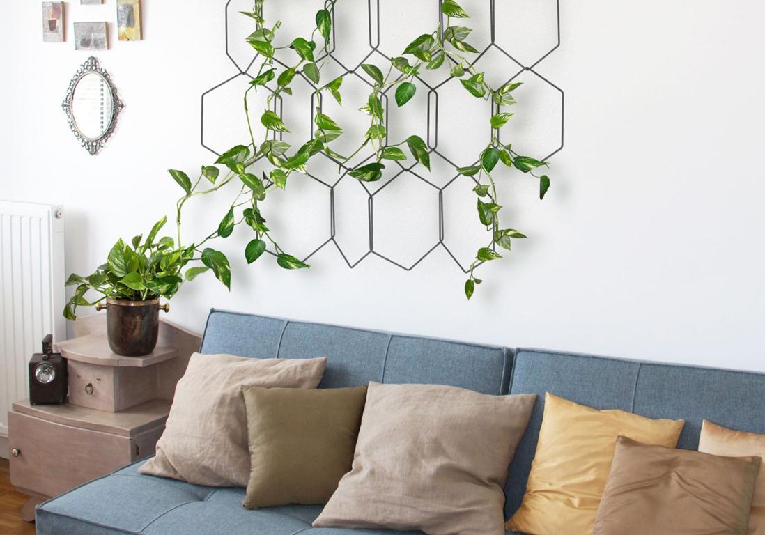 plantes grimpantes comment les entretenir elle. Black Bedroom Furniture Sets. Home Design Ideas