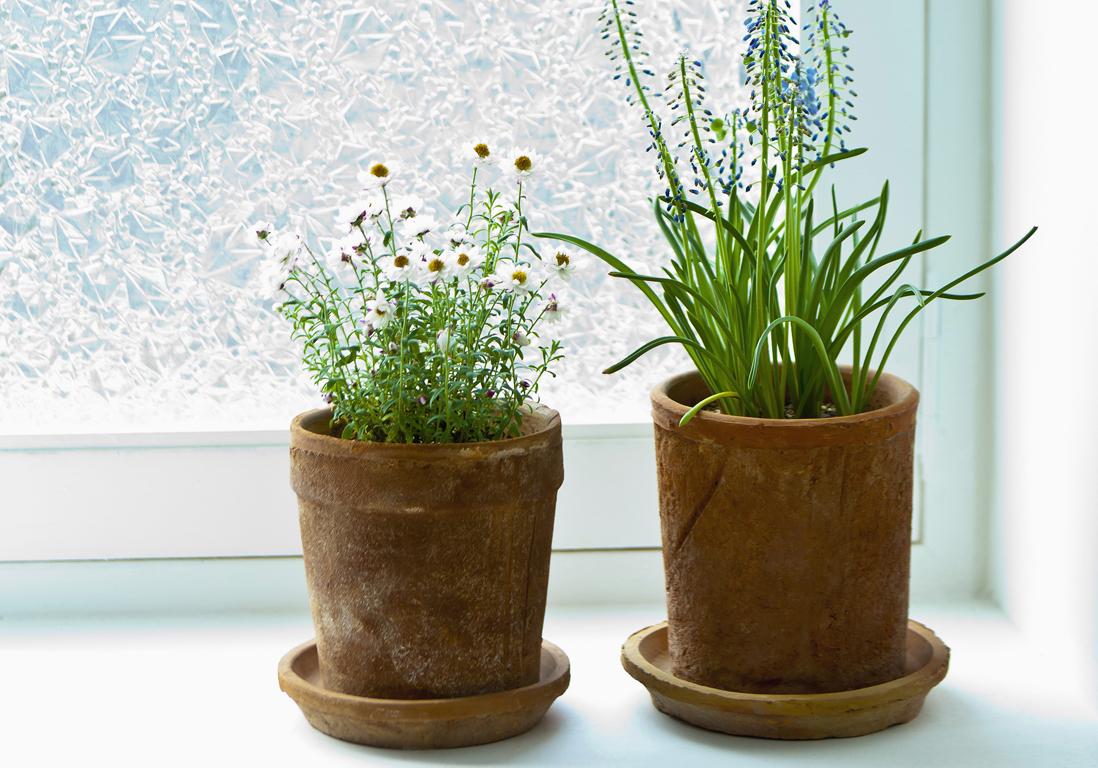 Plante D Intérieur Qui Aime La Chaleur quelle exposition pour ma plante d'intérieur ? - elle décoration