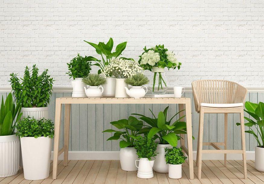Cette plante increvable suscitera des compliments de tout votre entourage