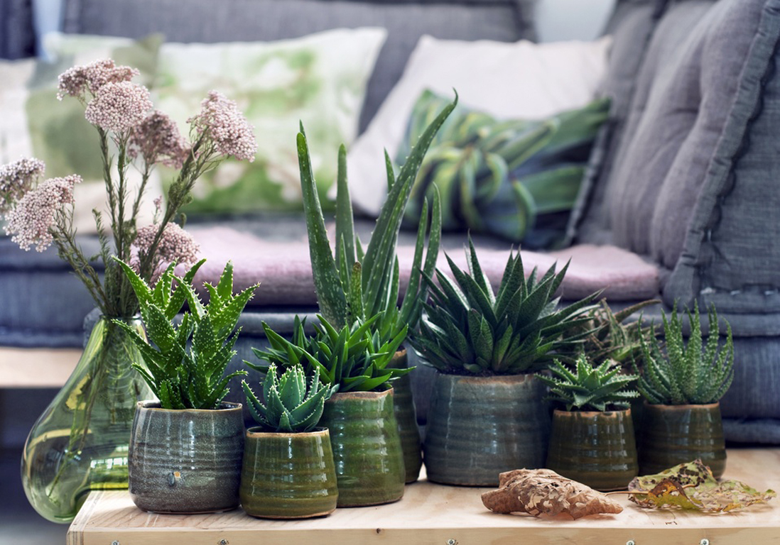 6 plantes increvables pour celles qui n'ont vraiment pas la main