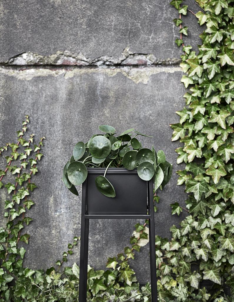 Plante D Intérieur Tendance plantes tendance sur instagram : top 5 des plantes les plus