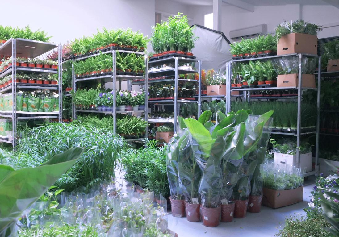 Vente de plantes XXL les 4 et 5 novembre : du green à 2 € que tout Paris va s'arracher !