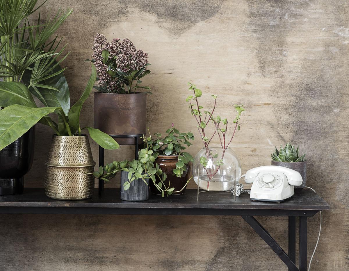 6 plantes adopter au bureau pour un espace de travail - Maison des enfants de la cote d opale ...