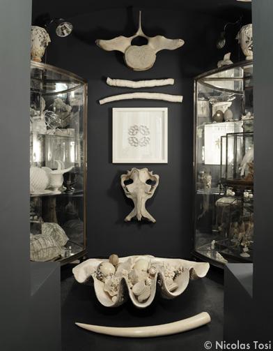 cr ez votre cabinet de curiosit s elle d coration. Black Bedroom Furniture Sets. Home Design Ideas