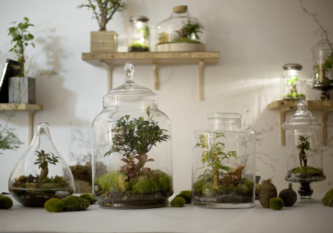 Comment Fabriquer Un Terrarium Pour Ses Plantes Elle Decoration