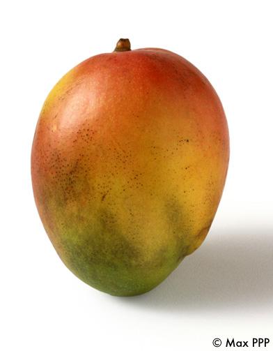 Vinaigrette mangue citronnelle - 10 recettes d'huiles et