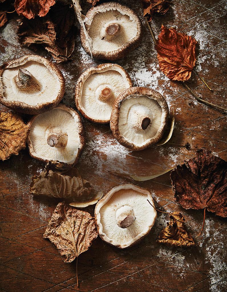 Comment choisir, préparer et cuisiner les champignons
