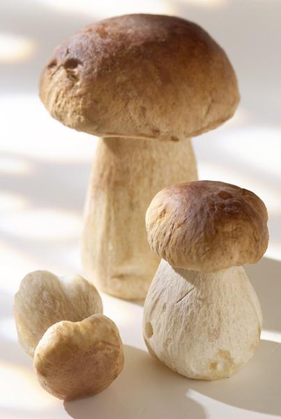Poêlée de champignons d'automne pour 4 personnes ...