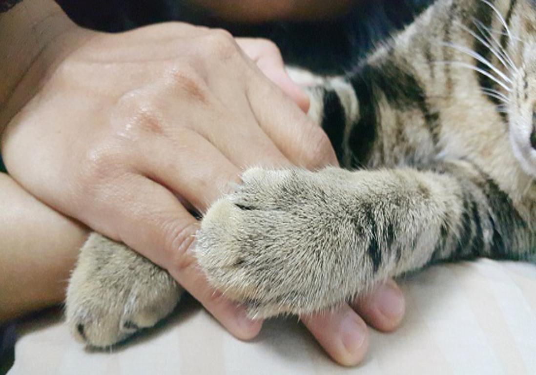 « Ça va, c'est juste un chat » : le deuil incompris des animaux de compagnie - Elle