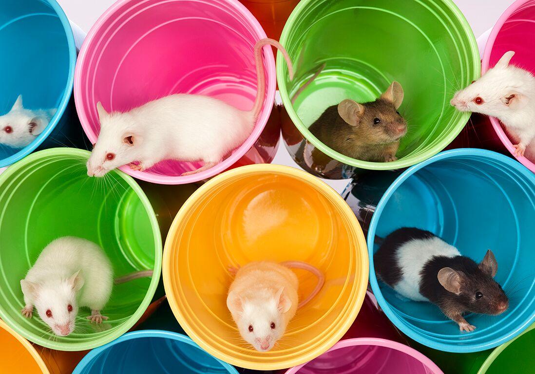 J Ai Une Souris Dans Mon Mur rêver de rat ou de souris : signification du rongeur dans un
