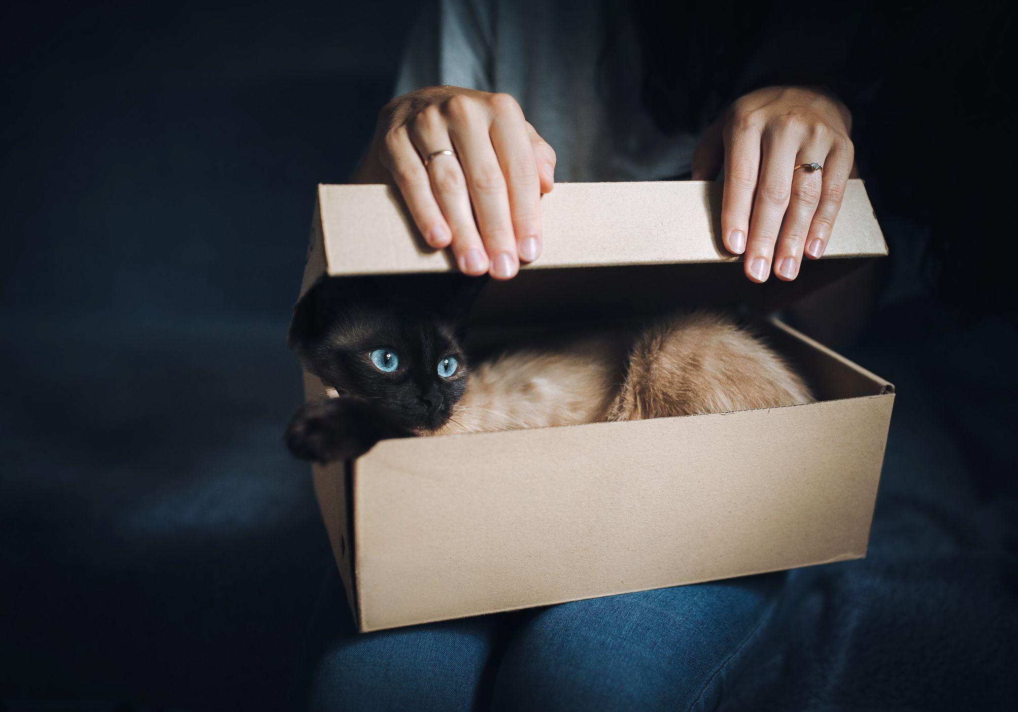 L'ailurophobie : tout savoir sur la peur panique des chats