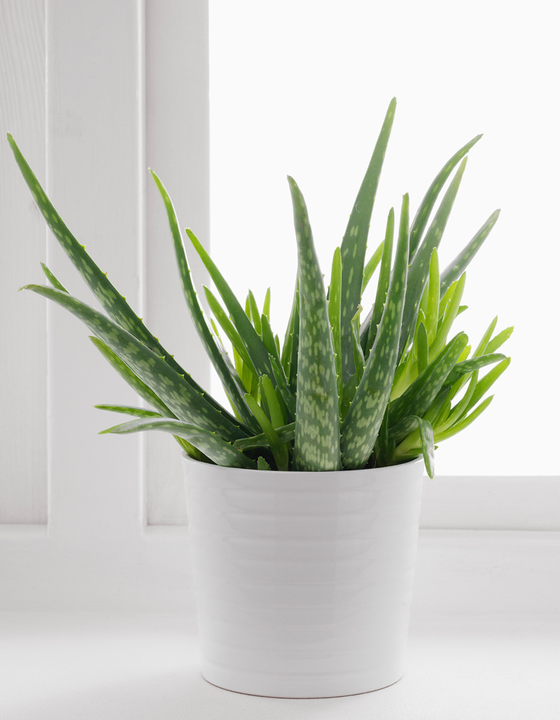 plante exterieur ikea stunning ikea cactaceae potted plant plante with plante exterieur ikea. Black Bedroom Furniture Sets. Home Design Ideas