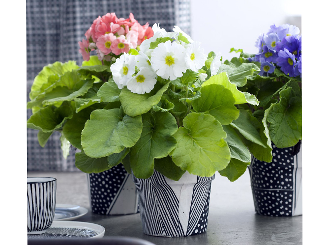 Customiser votre pot de fleurs image