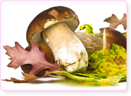 x-mag-champignons-cepes-d8757.png