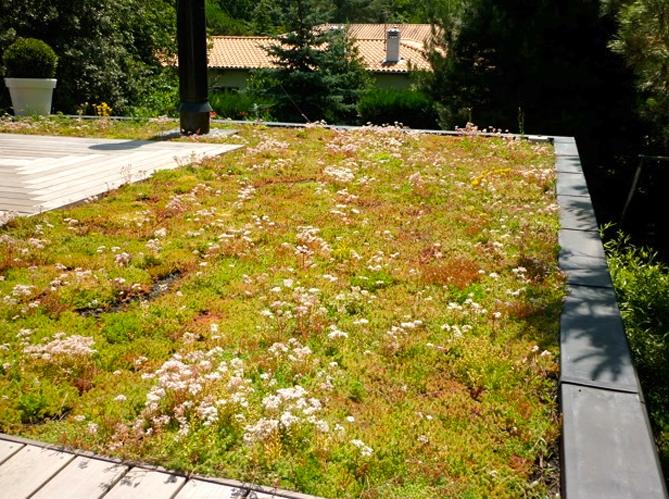 Je veux une toiture v g tale elle d coration for Toit terrasse vegetal