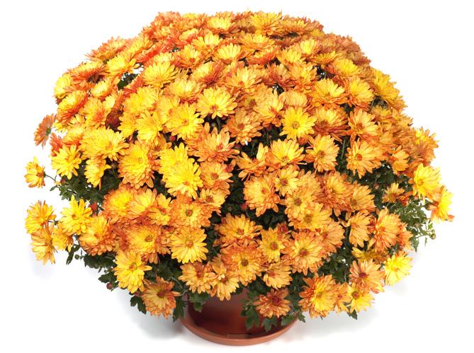 Le langage des fleurs les originales image