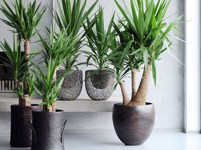 Le on de d co quelle plante pour mon bureau elle for Pot de decoration interieur