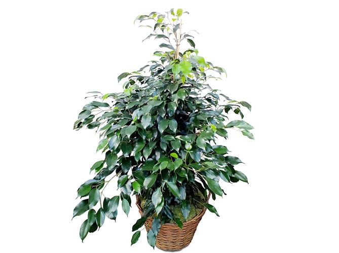 Célèbre Leçon de déco : quelle plante pour mon bureau ? - Elle Décoration PC91