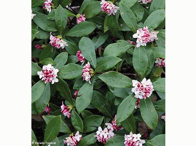 Les arbustes (image_3)
