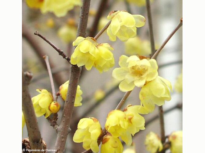 Les arbustes (image_4)