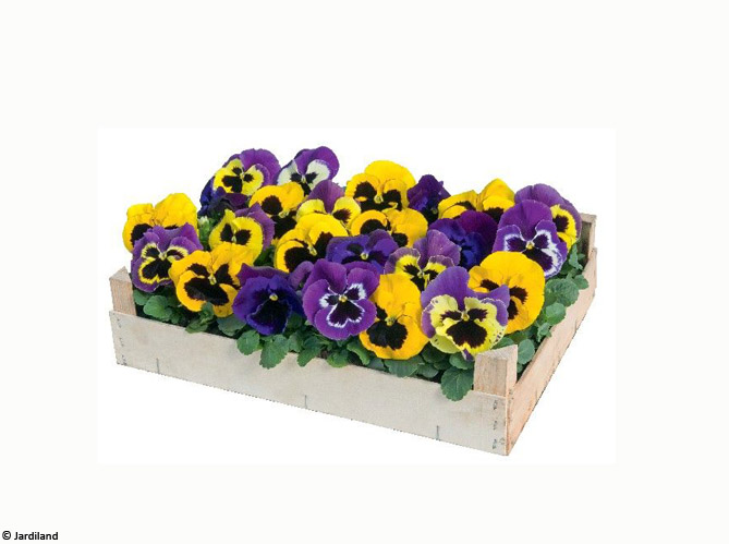 Les fleurs image