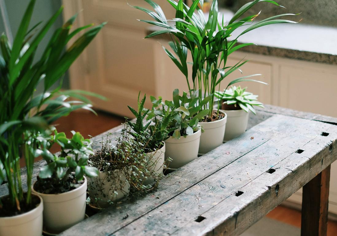 Paris week end du 2 3 et 4 mars 2018 infos 75 for Plante 1 euro paris