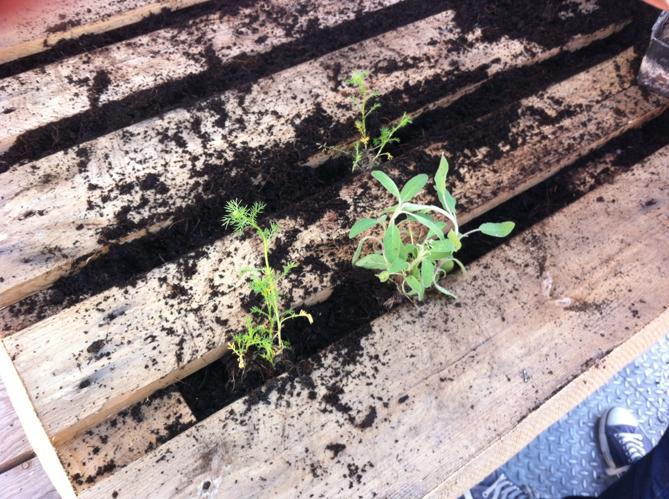 Planter image
