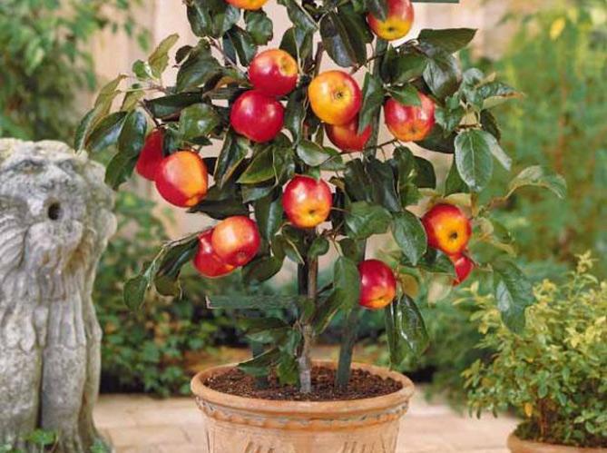Planter les arbres fruitiers les bonnes conditions image