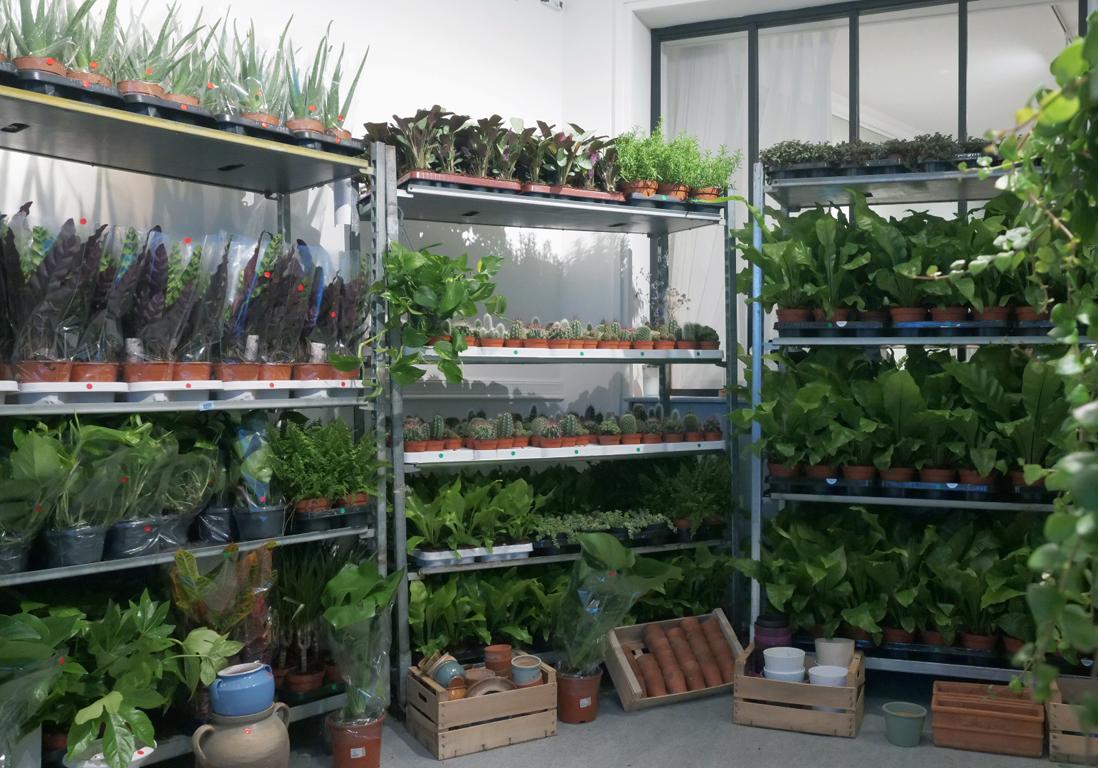 Vente de plantes xxl les 4 et 5 novembre du green 2 for Vente de plantes