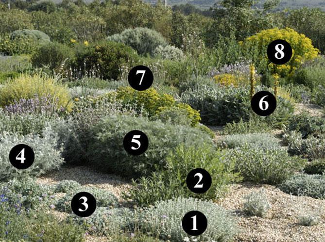 Un jardin sec desertique image