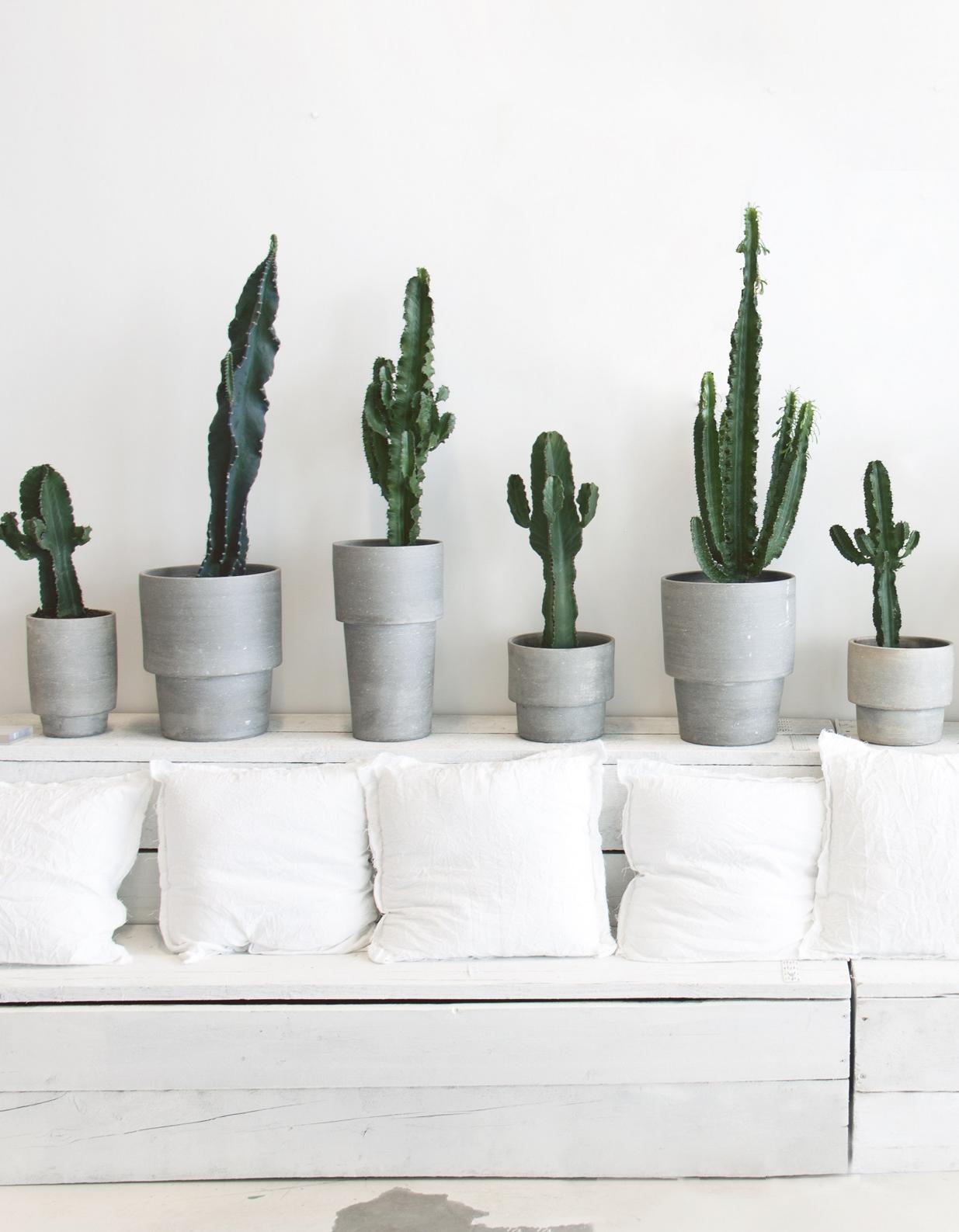 vous ne tuerez plus jamais vos plantes gr ce ces 5 astuces toutes simples elle d coration. Black Bedroom Furniture Sets. Home Design Ideas