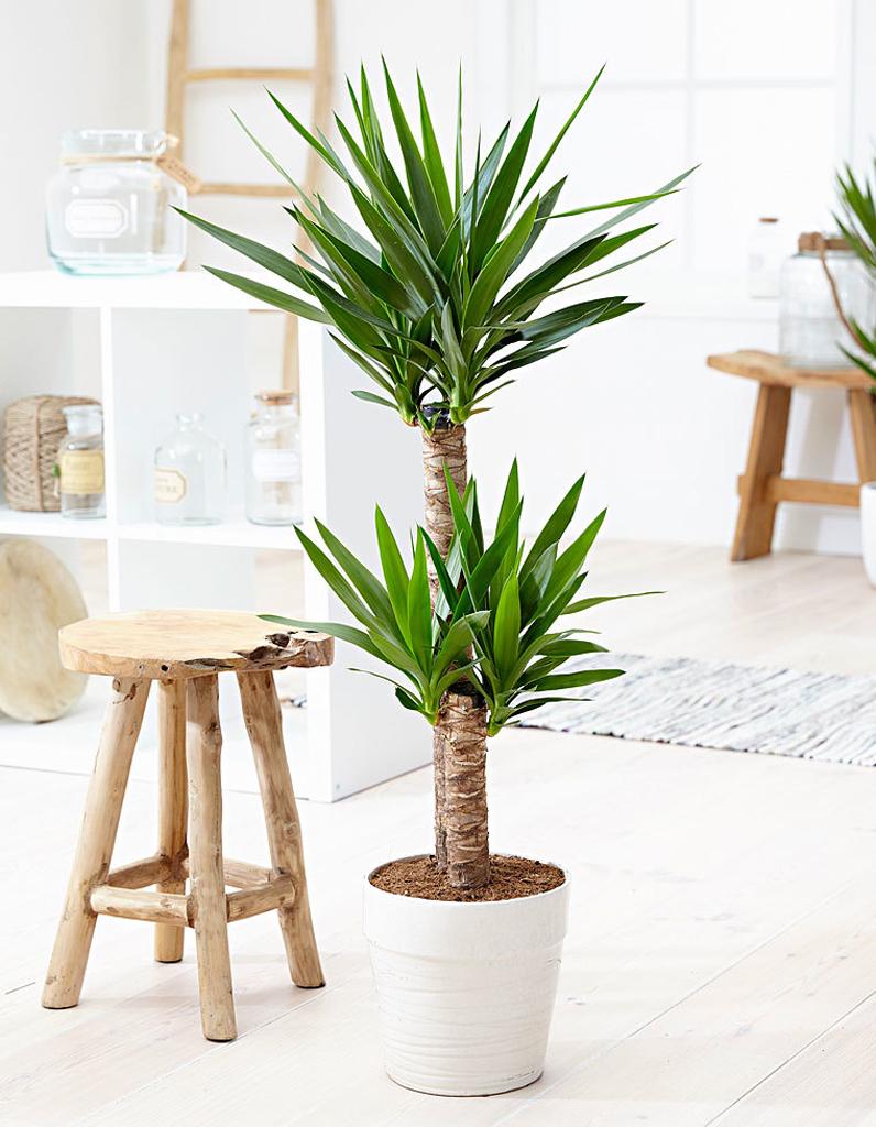 Yucca Dans Salle De Bain ~ oui aux plantes d polluantes pour un int rieur sain elle fr les