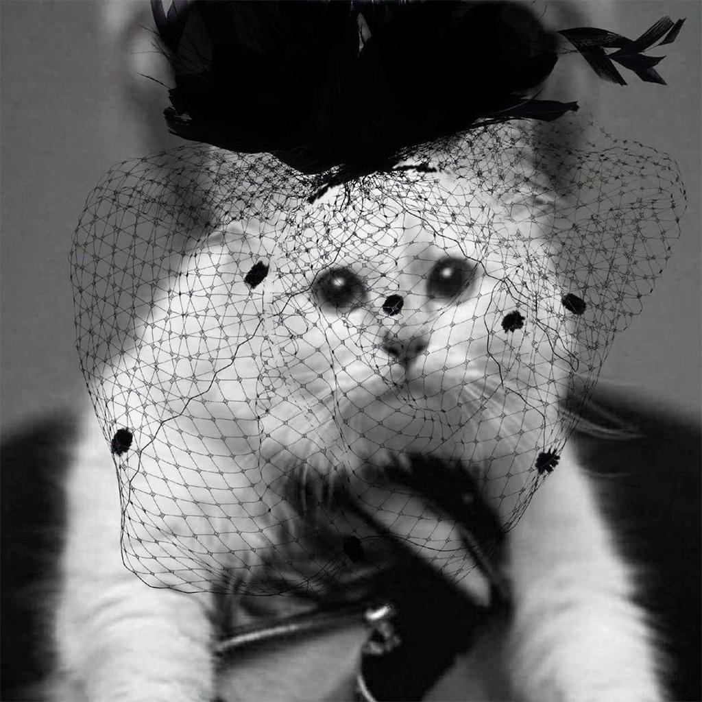 salut les zinzins de la rondelle Karl-Lagerfeld-voici-la-femme-qui-va-heriter-de-Choupette