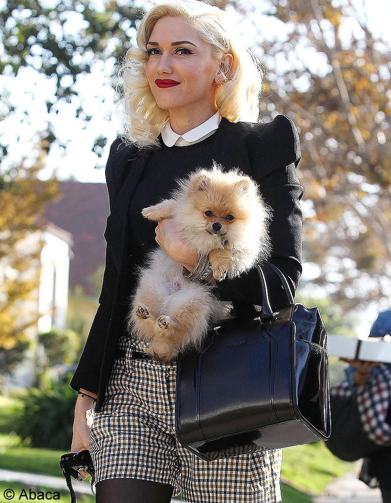 gwen stefani et son chien les animaux meilleurs amis des stars elle. Black Bedroom Furniture Sets. Home Design Ideas