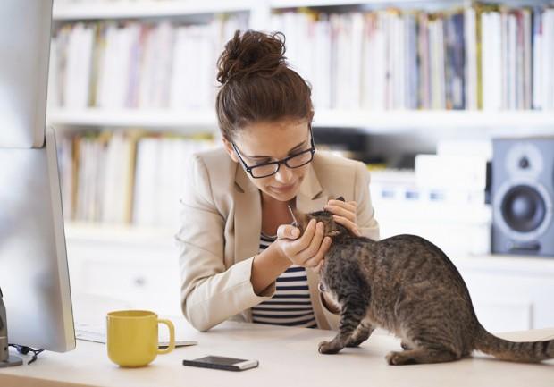 Venir avec son chat au bureau, un concept inédit en provenance du Japon